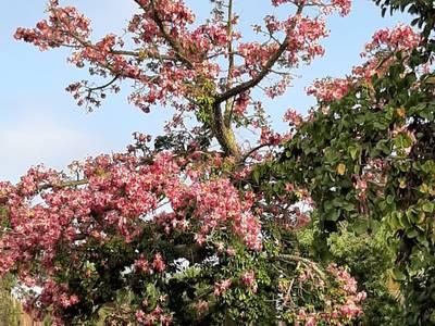 Salou celebra demà el dia gran de la Festa Major del 30 d'Octubre amb la plantada d'arbres, la paella popular i l'esclat de focs