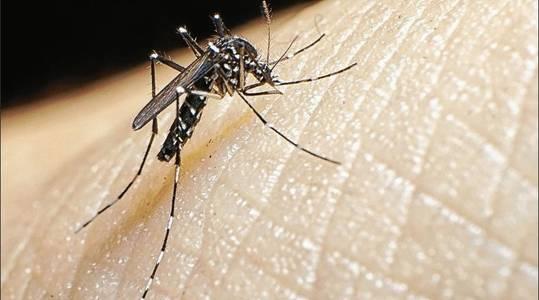 L'Ajuntament de Salou du a terme una diagnosi per prevenir l'augment dels mosquits tigre