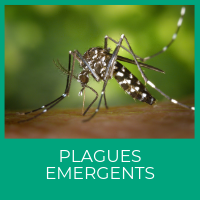 Plagues emergents