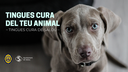Tingues cura del teu animal