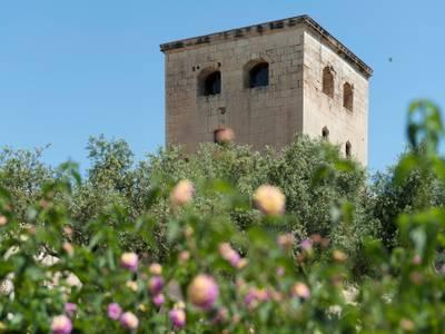 Adjudicada la neteja, manteniment i conservació dels espais verds públics i arbrat després de dividir Salou en 3 grans zones