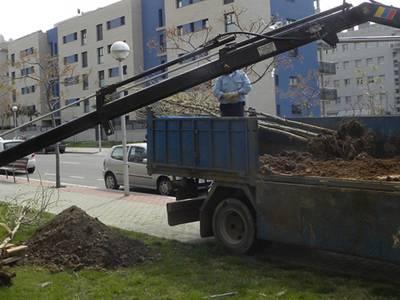 Destinen més de 90.000 euros a la reposició d'arbrat a una vintena de carrers de Salou
