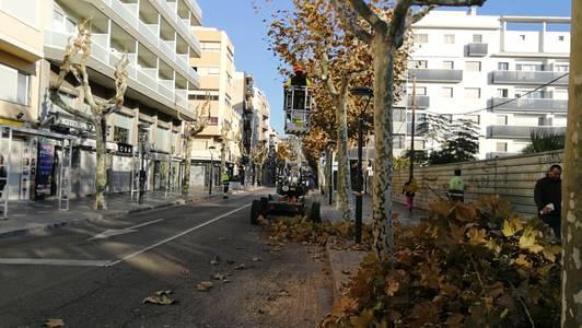 Salou inicia la campanya de la poda de més de 10.000 unitats vegetals de carrer del municipi
