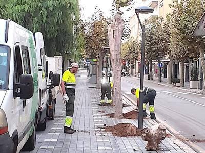 L'Ajuntament de Salou replantarà 8 exemplars de plataner al carrer Barcelona