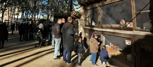 La mostra d'aviram i bestiari autòcton català torna a la Masia Catalana  per aquestes festes