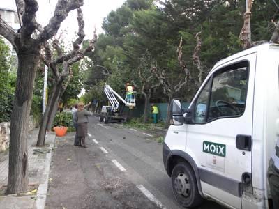 S'inicia la poda dels més de 8.000 arbres de Salou