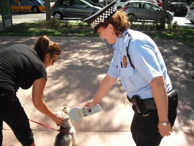 Seguretat Ciutadana informa del seu servei d'identificació i control de gossos en benefici de la convivència i la salubritat
