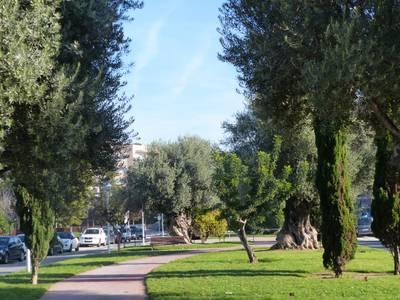 Salou saca a concurso el contrato de mantenimiento y conservación de la jardinería de Salou