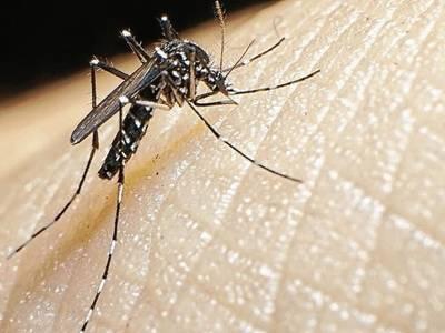 El Ayuntamiento de Salou lleva a cabo un diagnóstico para prevenir el aumento de los mosquitos tigre