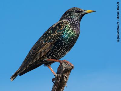 Una quincena de amantes de la ornitología conocerán, este jueves, los pájaros del Camí de la Torre, dentro del Salou Actiu Tardor 2019