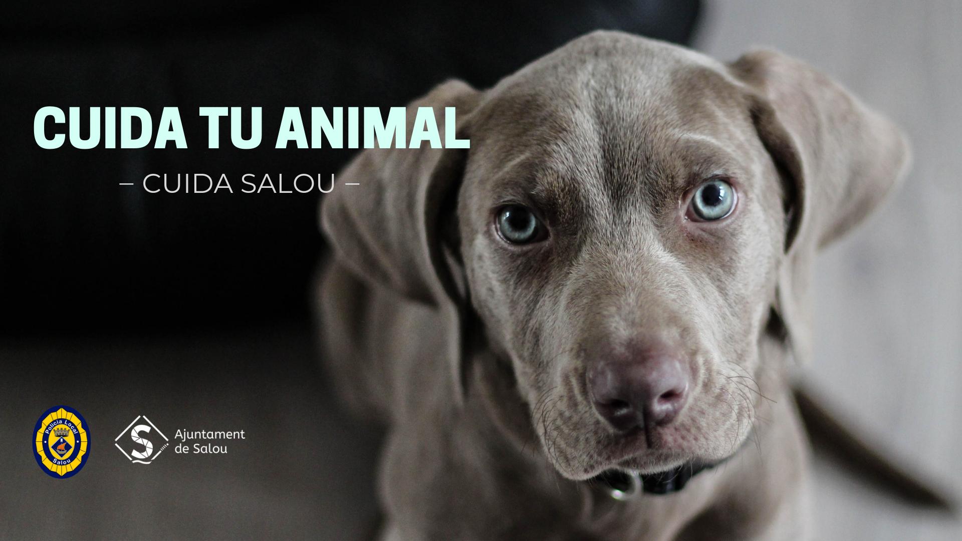 Cuida tu animal